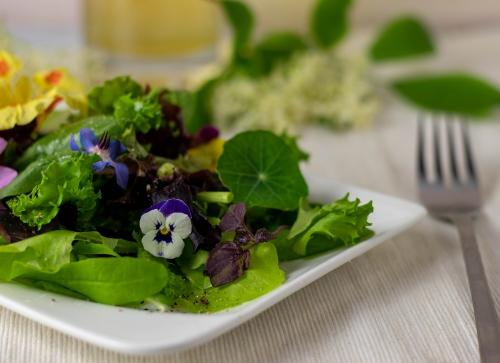 Auf selbst geerntetem Salat