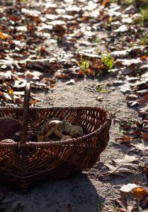Pilzglück im Herbst