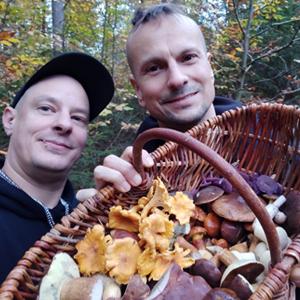 Heimische Pilze sammeln