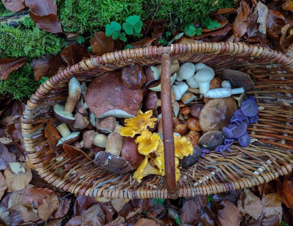 Eine bunte, leckere Vielfalt im Pilzkorb