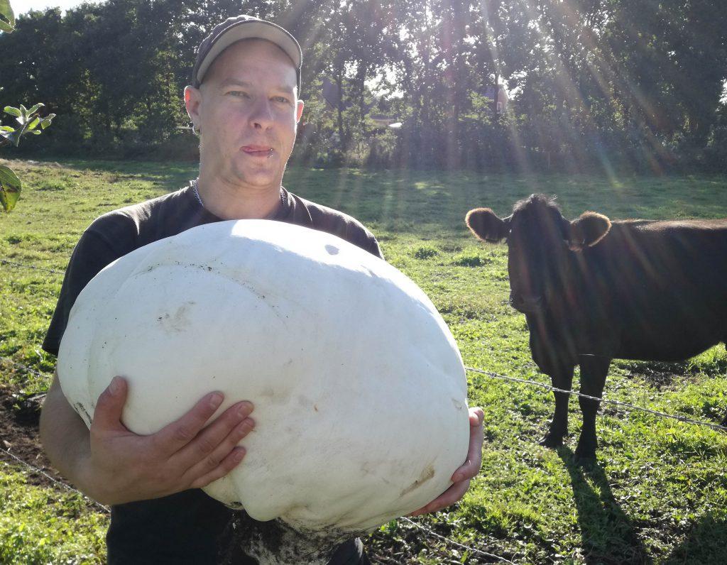 Da staunt sogar die Kuh!