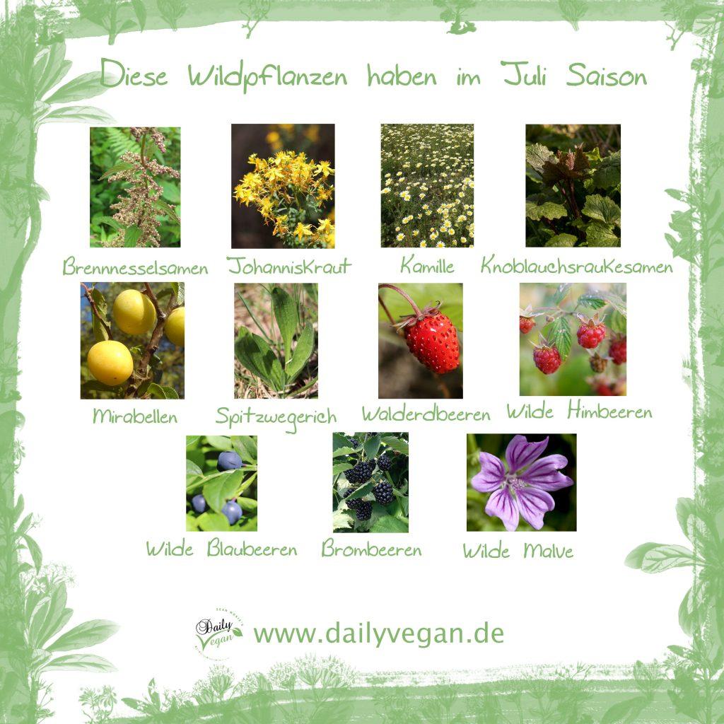 Infografik: Saisonale Wildkräuter und Wildpflanzen im Juli