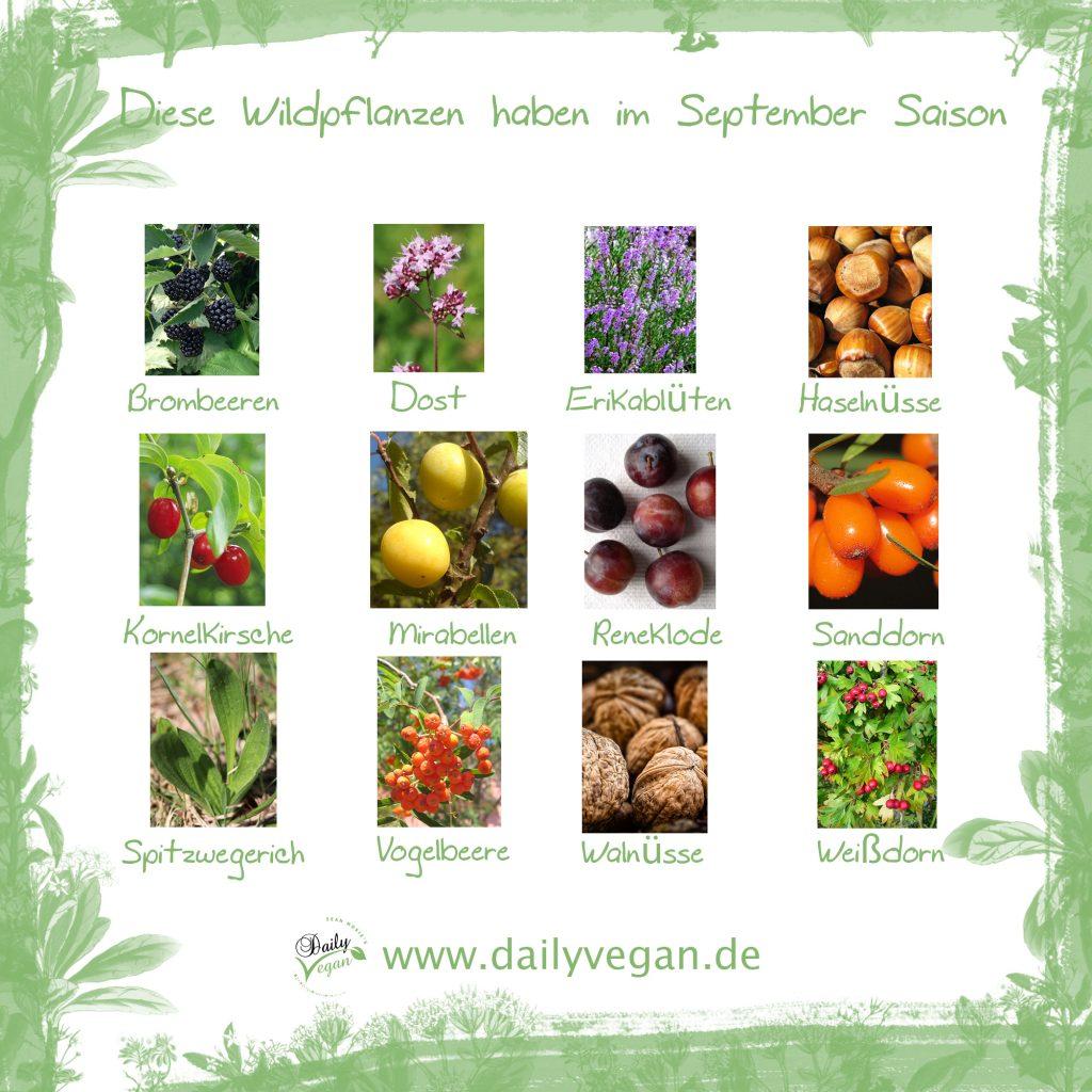 Saisonale Wildpflanzen und -kräuter im September
