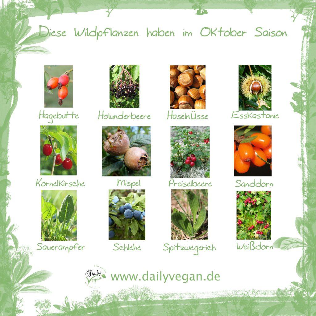 Saisonale und regionale, essbare Wildpflanzen im Oktober